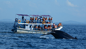 Whale Watching in Mirissa